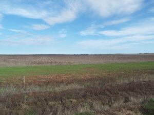 11/29 160± Acres • Surface & Minerals Tillman County Oklahoma