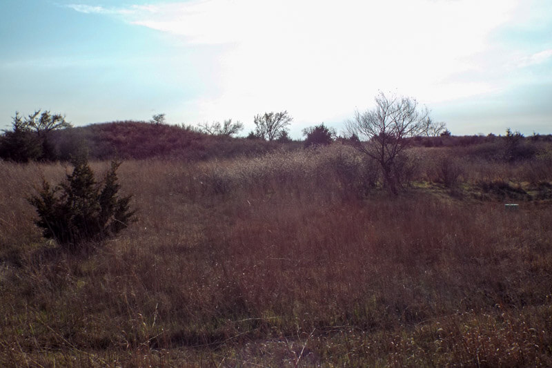 Hunting Land Cattle Pasture