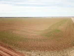 240± Acres, Minerals & Grass