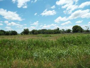 Cropland, Medford