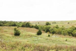 11/13 160± Acres * Elk City * Beckham County * Oklahoma