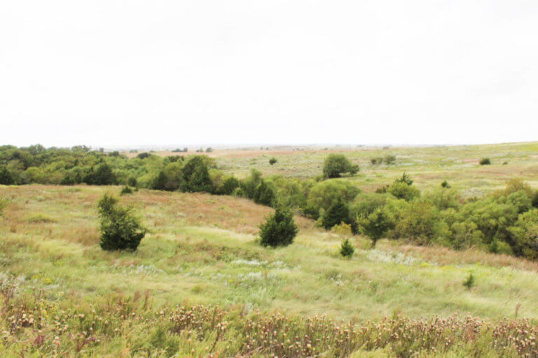 11/13 160± Acres * Elk City * Beckham County * Oklahoma